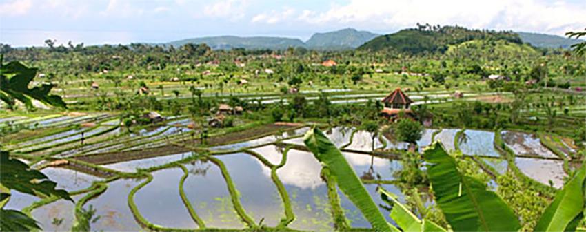Campos de aroz Bali