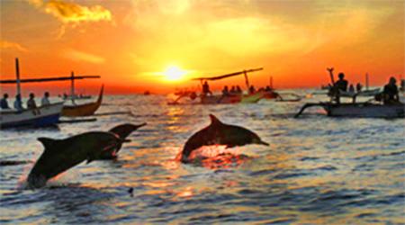 dolphins lovina