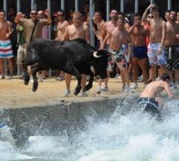 Bulls in Javea